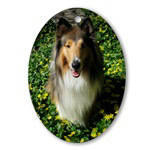 Collie in Spring