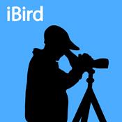 iBird (blue)
