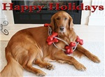 A Dog's Life Rescue Holiday Cards