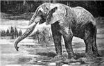 African Plains Mammals