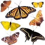 Butterfly Butterfly!