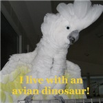 I live with an avian dinosaur