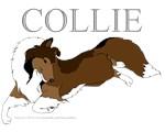 Collie Colors
