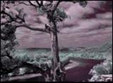360 Bridge Tree