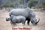 Save The Rhino !