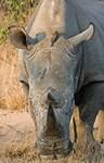 Rhino and Hippo