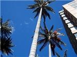 Bogota Palm Trees