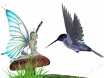 Hummingbird and Fairy
