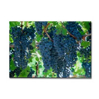 Napa Valley Wine Country Magnet Gifts