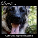 Love is GSD Rescue- Young Male