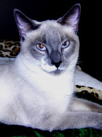 Lesser cats, Domestics and Miscellaneous Cat Merch