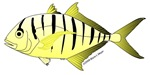 Yellow Trevally (Jack)