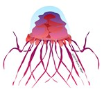 Crossota Deep Sea Jellyfish 2