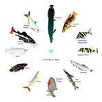 12 Amazon Fish Clock