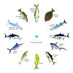 So Cal Sportfishing Clock 1