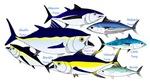 7 Tuna