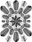 Ernst Haeckel Trilobite Mandala