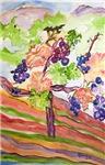 Cinnabar Vineyard