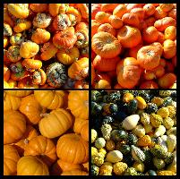 Pumpkins and Gourds Collection