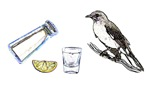Picture Pun - Tequilla Mockingbird