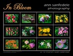 In Bloom -  Wall Calendar and more