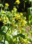 Yellow Garden Blossoms