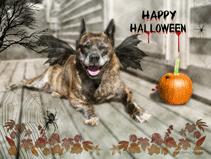 Halloween Dog Photo