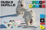 Husky Hurdle WOOF Games 2014