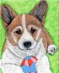 Playful Corgi Pup
