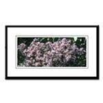 Arizona  Cacti & Flowers Small Framed Prints