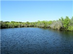 LIFE AT THE EVERGLADES