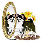 Chihuahua In A Mirror