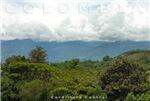 Cordillera Central Colombiana