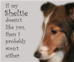 Friendly Sheltie