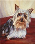Marcello the Yorkshire Terrier