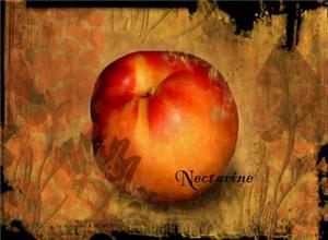 Botanical Nectarine