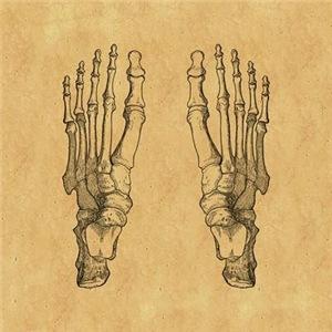 Vintage Foot Bones