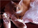 Cat and Ballet Slippers Gifts, Cards T-shirts