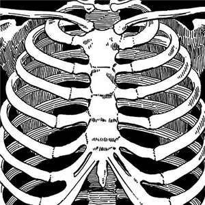 Ribcage Pattern