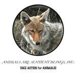 AASB Coyote