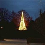 Christmas Holiday Night Tree