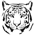 Serenity Tiger