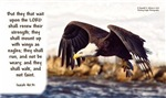 Mount on Wings as Eagles - Isaiah 40:31