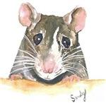 Rat Face