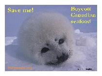 Save the harp seals!