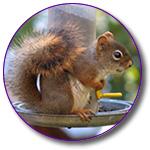 Squirrel Stuff