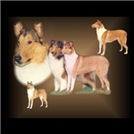 Rough / Smooth Collie