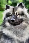 Keeshond Gifts of Art