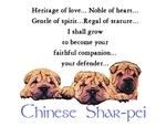 Chinese Shar-Pei Pups