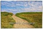 Chilmark Beach Path